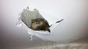 stretch ceiling damage